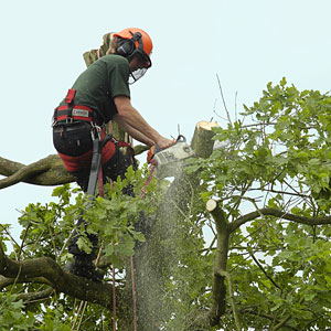 Image of Laverock Tree Care Tree Removal
