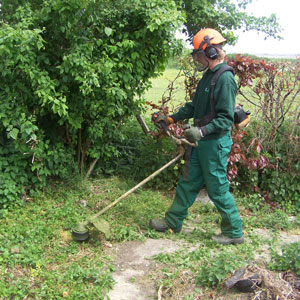 Image of Laverock Tree Care Brush Cutting / Vegetation Clearance