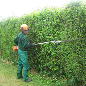 Image of Laverock Tree Care Hedge Maintenance